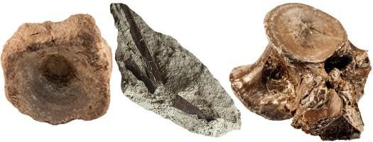 Les vertébrés fossiles